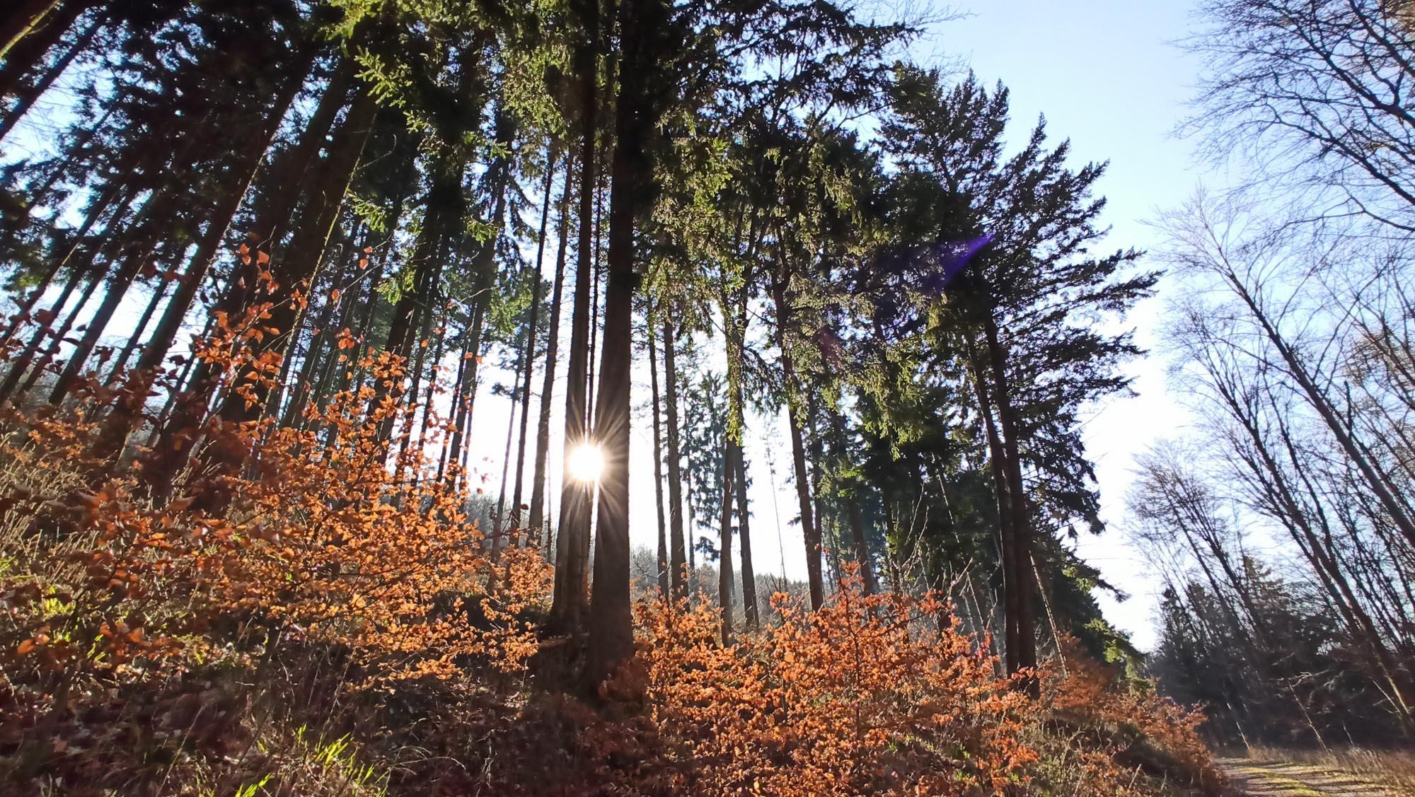 Waldbaden im Thüringer Wald